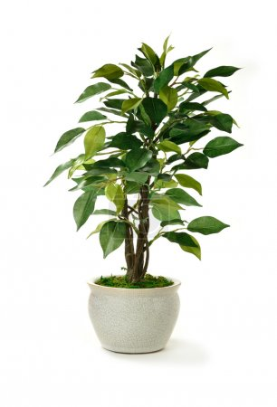 Photo for Studio image of a miniature artificial tree in a pot. Concept image for interior design or office furniture use against a white background. Copy space. - Royalty Free Image