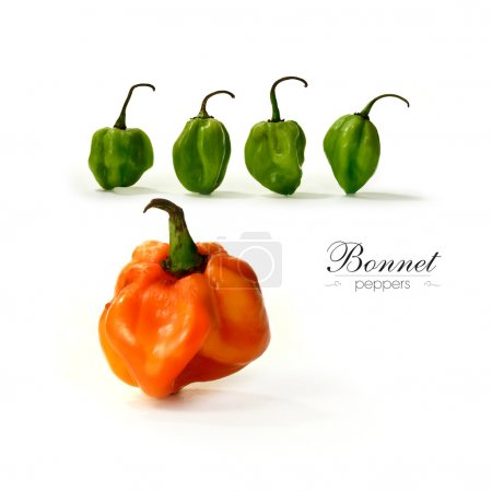 Bonnet Peppers