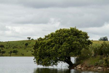 Shore of the Alqueva lake located in Alentejo, Portugal
