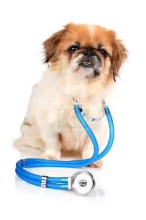 Hund und Stethoskop.