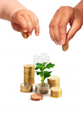 Hands with coins and plant.