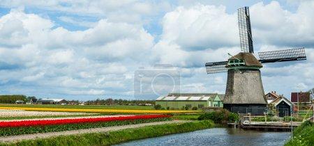 Photo pour Paysage avec moulin à vent de Janie et champ coloré de tulipes en Hollande. Panorama - image libre de droit