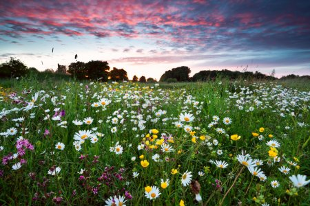 Photo for Many summer wildflowers on meadow at dramatic pink sunset - Royalty Free Image