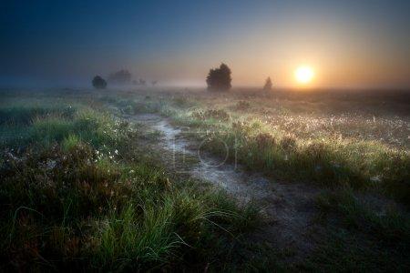 Photo pour Misty sunrise over countryside path through swamps, Fochteloerveen, Drenthe, Pays-Bas - image libre de droit