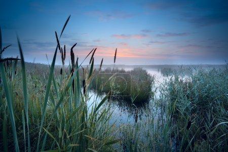 misty swamp at sunrise
