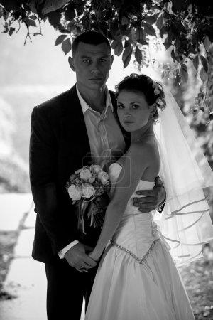 Photo pour Portrait noir et blanc de mariés étreignant sous un arbre - image libre de droit
