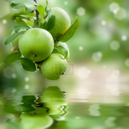 Green apples reflection in water
