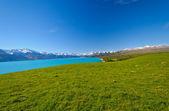 White Capped Peak across an alpine meadow