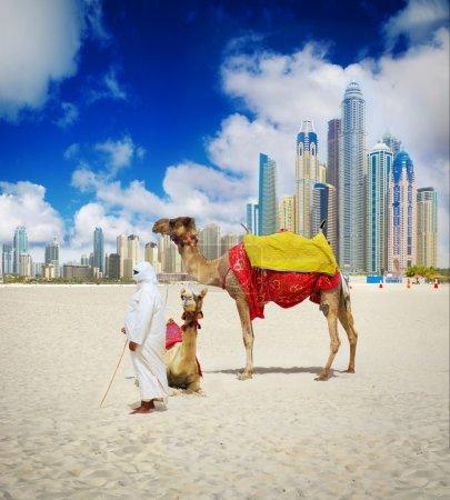 Photo pour Camel on Dubai Beach, Émirats arabes unis - image libre de droit