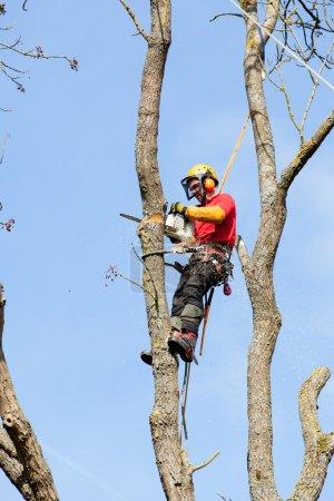 Photo pour Un arboriste coupe un arbre avec une tronçonneuse - image libre de droit