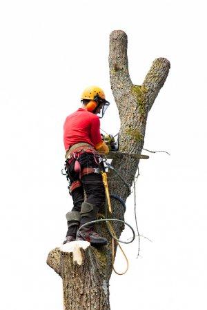 Photo pour Un arboriculteur couper un arbre avec une tronçonneuse - image libre de droit