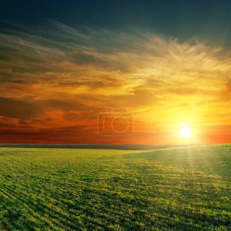 Photo pour Bon coucher de soleil sur le champ vert - image libre de droit