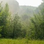 Fog over morning forest...