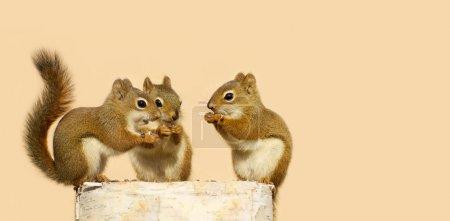 Baby squirrels sharing.