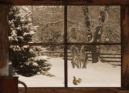 Photo pour Conception de carte de Noël avec un cerf de la mère et son bébé, en examinant un peu écureuil mangeant des graines dans la neige, avec une adorable Mésange sur le chargeur, comme on le voit par la fenêtre de la ferme. - image libre de droit