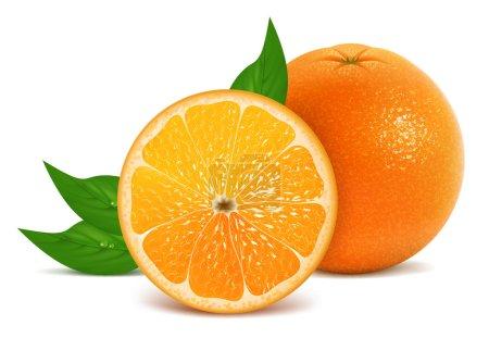 Illustration for Vector illustration of fresh orange - Royalty Free Image