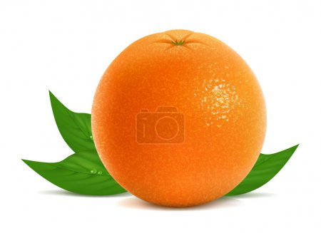 Illustration for Vector illustration of fresh orange with leaves - Royalty Free Image