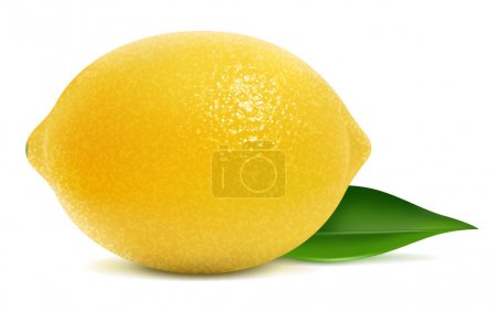 Illustration for Vector illustration of fresh lemon - Royalty Free Image