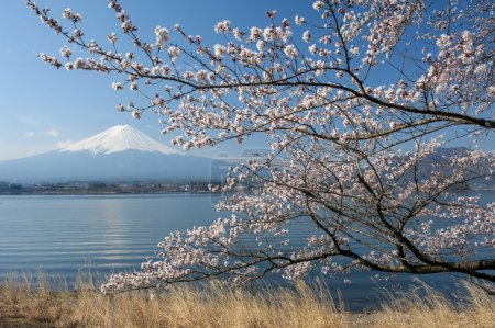 Mt Fuji and Cherry Blossom