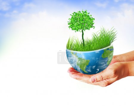 Environmental Concept. Globe and a green tree in the hands