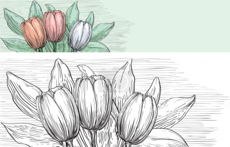 Illustration for Vector of tulips with many leaves at color and black and white engraving style. - Royalty Free Image