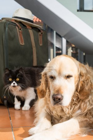 Golden Retriever and Persian cat books