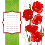 Red poppies on a white background with frame with place for tex