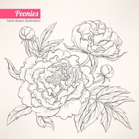 Illustration for Beautiful hand drawn illustration with peony bouquet on a beige backgroun - Royalty Free Image