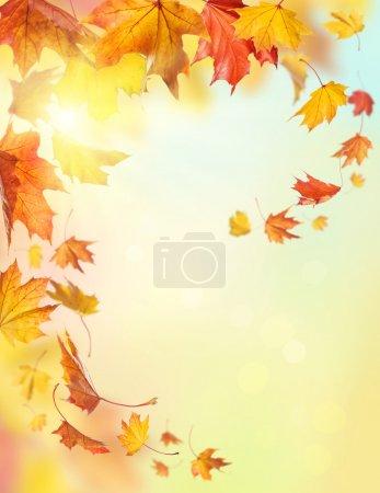Photo pour Automne tombant feuilles sur fond coloré - image libre de droit