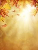 őszi levelek
