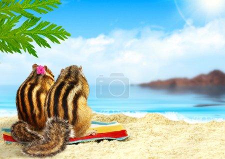 Бурундуки на пляже медовый месяц