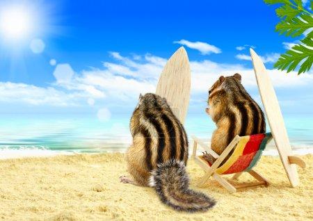 Бурундуки серфингисты на пляже
