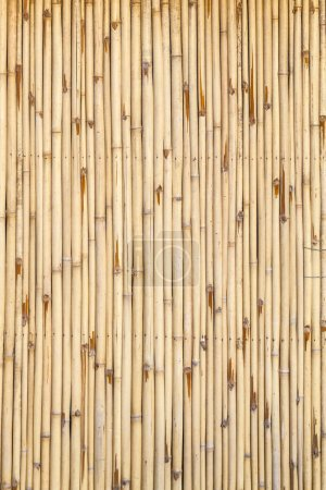 Pattern of bamboo background in yellow color...