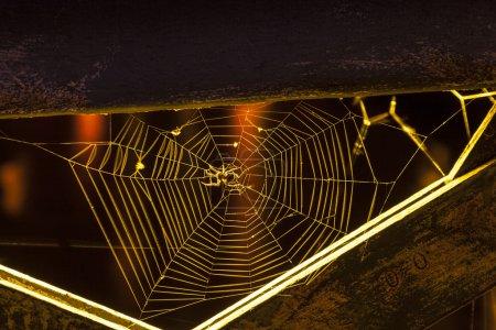 Spinne nachts im Netz