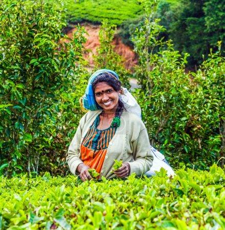 Photo pour NUWARa ELIYA, SRI LANKA - 14 AOÛT : récolte dans les champs de thé, cueilleur de thé dans les hauts plateaux cueille le thé sur 14. Août 2005, Nuwara Eliya, Sri Lanka . - image libre de droit