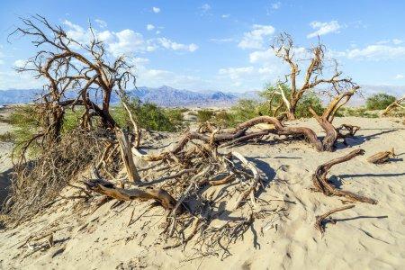 Photo pour Paysage désertique dans la vallée de la mort sans personnes - image libre de droit