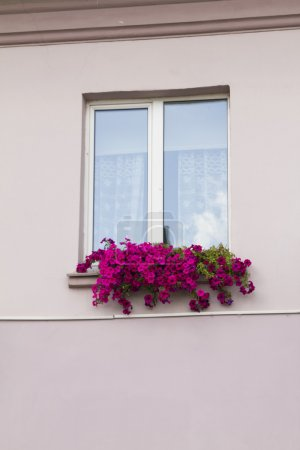 Old house, window, jalousie and flowers