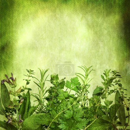 Photo for Herbal background, with grunge effects. Lots of copy space. Includes sage, mint, spearmint, rosemary, coriander, parsley, oregano and thyme. - Royalty Free Image