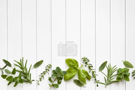 Photo for Fresh herbs border over white timber panel background. - Royalty Free Image