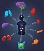Abstract colorful human anatomy