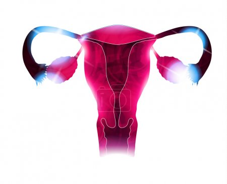 Womb beautiful bright design. Reproductive organs, bright colors