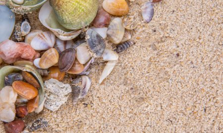 A group of different clams and sea shells on a bea...