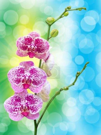 Photo pour Gros plan de fleur d'orchidée - image libre de droit