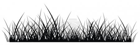 Illustration for Vector silhouette of grass on white background - Royalty Free Image