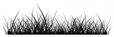 Grassilhouette