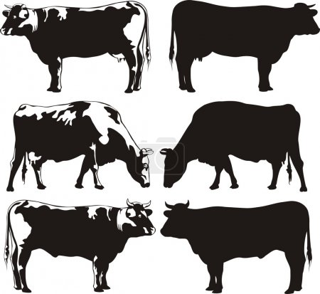 Illustration pour Bovins de reproduction pour la viande et le lait - animaux domestiques - image libre de droit