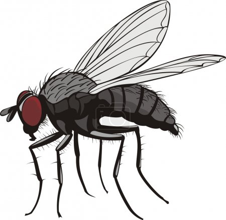 Illustration for Pest control - household insect pest - Royalty Free Image