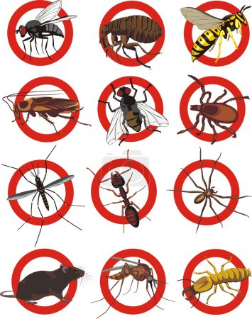Pests icon - color