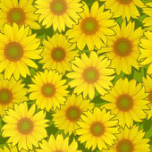 Slunečnicový květ bezešvé pozadí