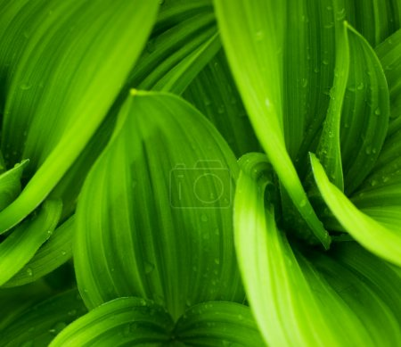 Photo for Grass and dew abstract background - Royalty Free Image